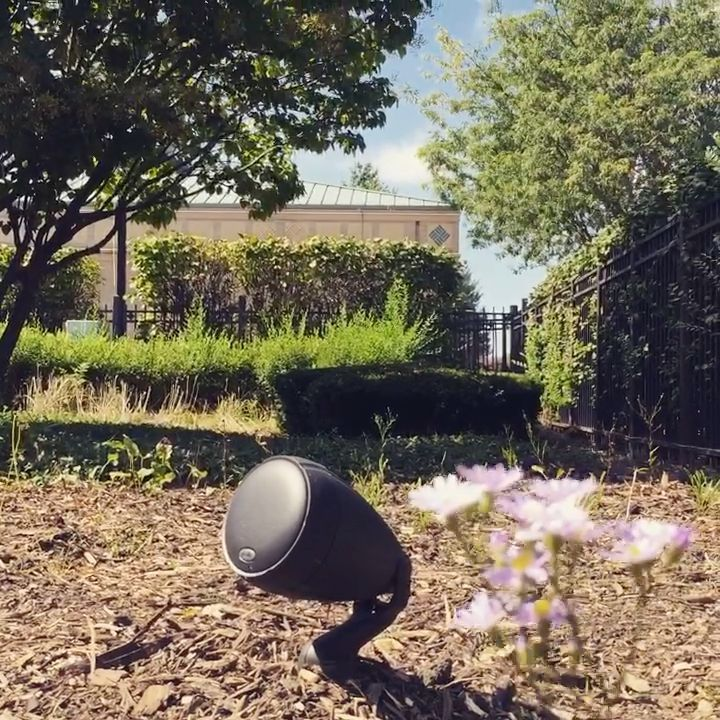 Neighborhood Listening Garden, 2019