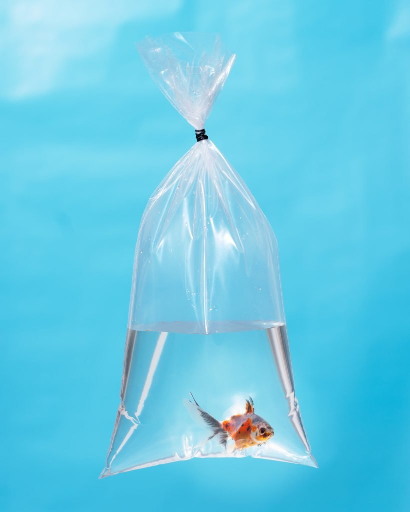 Light Calico Goldfish in a Bag, 2020